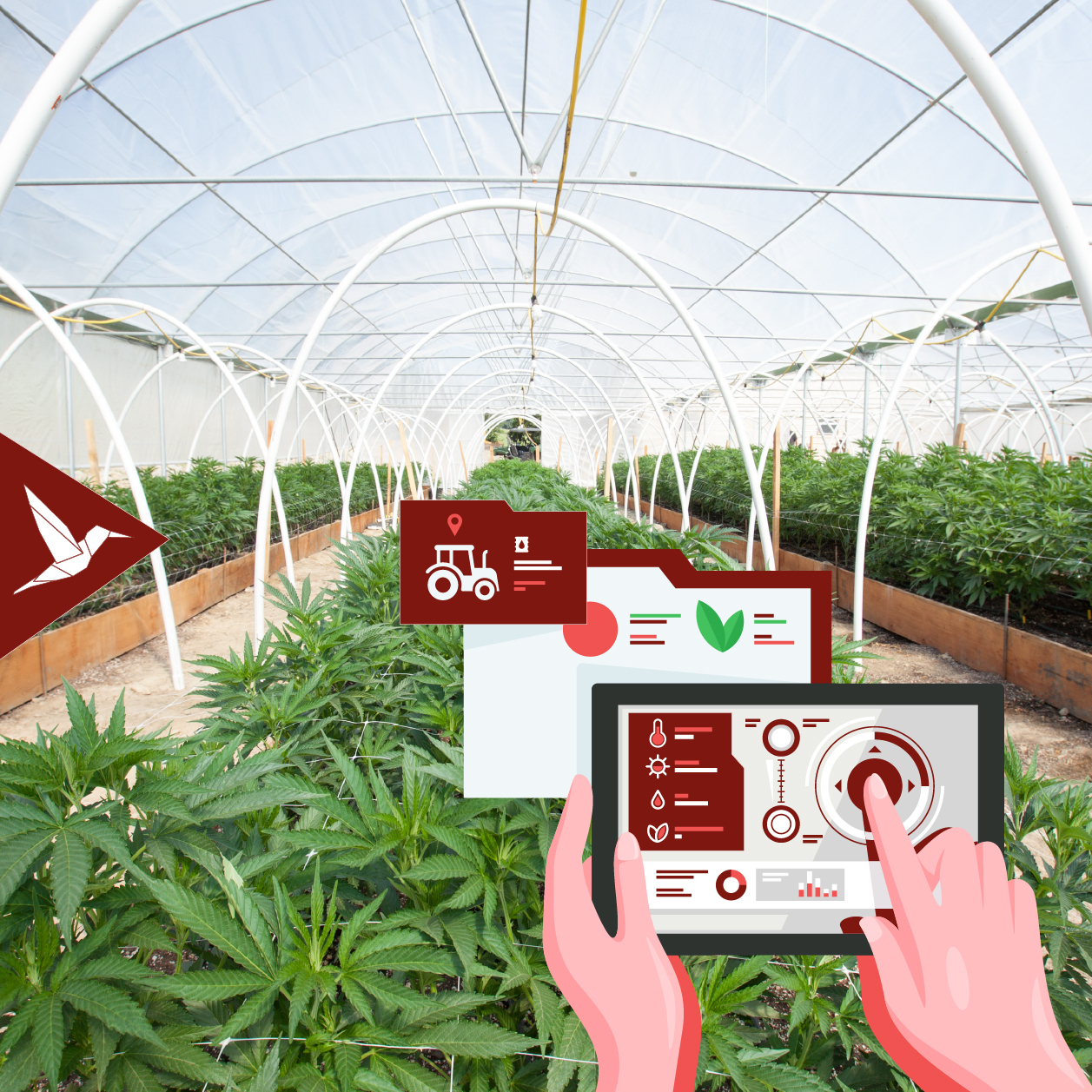 Cannabis smart greenhouse using techology to manage crop production